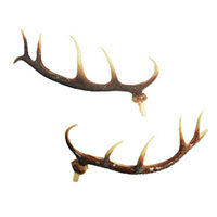Cuckoo Clock Parts Deer Antlers